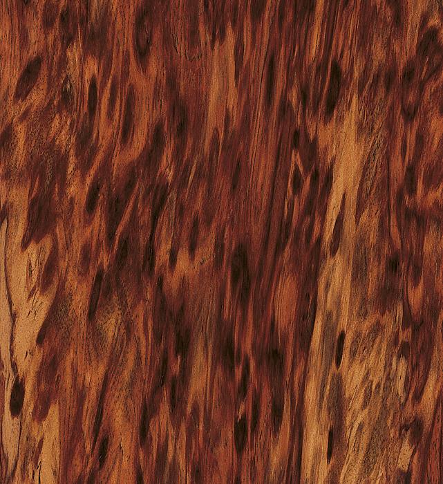 Tygrysie drzewo