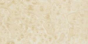 Klon pawie oczko