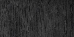 Dąb czarny bagienny